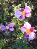 なんだろうこの花?いびつだけど欠損していわるけじゃなく、もともとこういう花なようだ